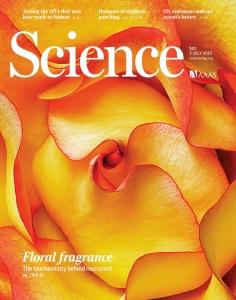 L'origine inattendue du parfum des roses