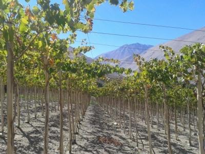 Infographies des effets du changement climatique sur la vigne et le vin